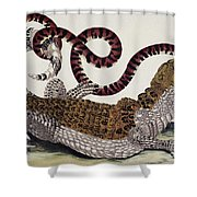 Crocodile & Snake Shower Curtain