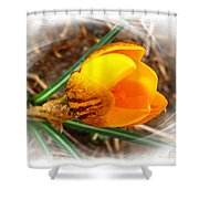 Crocus Gold Two Shower Curtain
