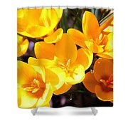 Crocuses In Yellow Shower Curtain