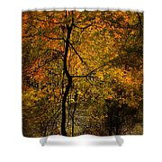 Crooked Tree At Beaver's Bend Shower Curtain