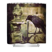 Crow On Iron Gate Shower Curtain