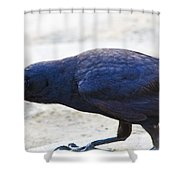 Crow Snacking Shower Curtain