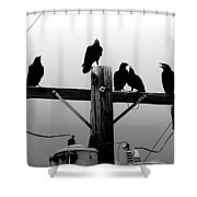 Crows And Insulators On Route 66 Shower Curtain