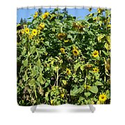 Crows In The Sunflowers Shower Curtain