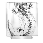 Cryptobranchus, Living Fossil Shower Curtain