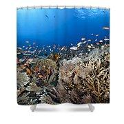 Crystal Bay Panorama Shower Curtain