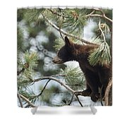 Cub In Tree Shower Curtain