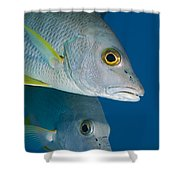Cubera Snappers Shower Curtain