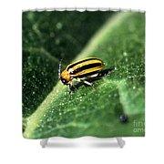 Cucumber Beetle Shower Curtain