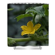 Cucumber Flower Shower Curtain