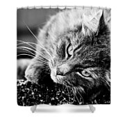 Cuddly Cat Shower Curtain