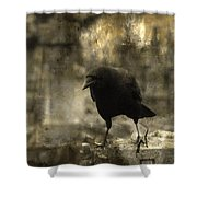Curiosity Of The Graveyard Crow Shower Curtain