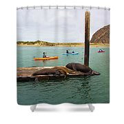 Curious About Sea Lions Shower Curtain