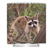 Curious Critter Shower Curtain