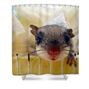 Curious Flyer Shower Curtain