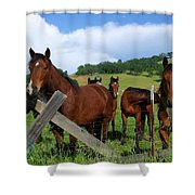 Curious Horses In Summer Shower Curtain