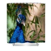 Curious Peacock Shower Curtain