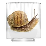 Curious Snail Shower Curtain