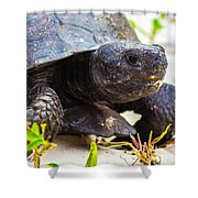 Curious Turtle Shower Curtain