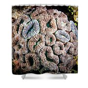Curler Coral Shower Curtain