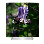 Curly Clematis Shower Curtain