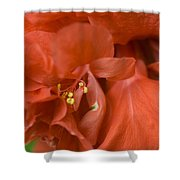 Curly Hibiscus Shower Curtain