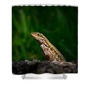Curlytail Shower Curtain