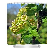 Currant In Bloom Shower Curtain