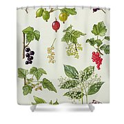 Currants And Berries Shower Curtain by Elizabeth Rice