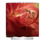 Curve Shower Curtain