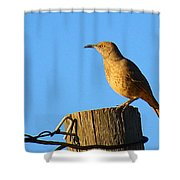 Curved Billed Thrasher Sitting On A Post Shower Curtain
