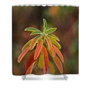 Cushion Spurge Shower Curtain