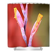Cusp Of Emergence Shower Curtain by Leigh Meredith
