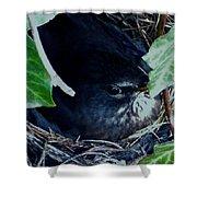Cute Black Bird Mum Watching Over Her Eggs In Her Nest Shower Curtain