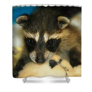 Cute Face Behind The Mask Baby Raccoon Shower Curtain