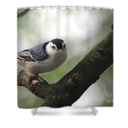 Cute Face Nuthatch Shower Curtain