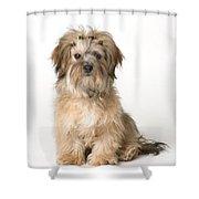 Cute Miniature Terrier Shower Curtain