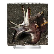 Cuttlefish With Tentacles Extended Shower Curtain