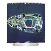 Cycladophora Goetheana Lm Shower Curtain by Eric V. Grave