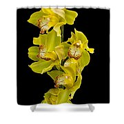 Cymbidium - Boat Orchid Shower Curtain