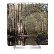 Cypress And Water Shower Curtain