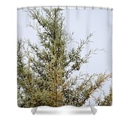 Cypress Shower Curtain