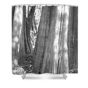 Cypress Path Shower Curtain