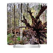 Cypress Roots Shower Curtain