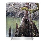 Cypress Stump #1 Shower Curtain