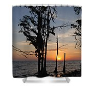Cypress Sunset Shower Curtain