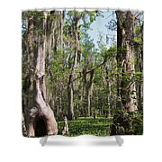 Cypress Trees And Water Hyacinth In Lake Martin Shower Curtain