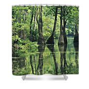 Cypress Trees Cross A Waterway Shower Curtain