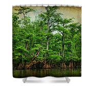 Cypress Trees Shower Curtain