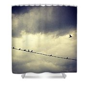 Da Birds Shower Curtain by Katie Cupcakes